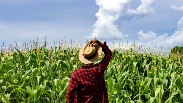 Recuperação judicial no agro: os impactos da nova lei para o produtor rural